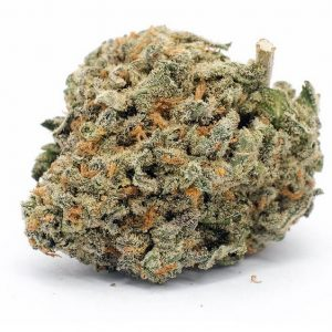Blueberry Pie Marijuana ZA