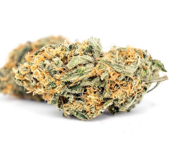 Citrus Haze Weed ZA