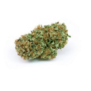 Harlequin Weed Strain SA
