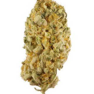 Jack Herer Weed South Africa