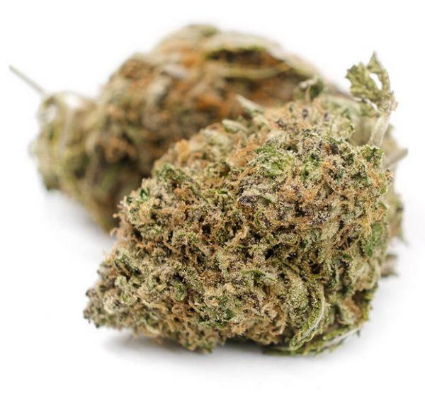 Purple Candy Marijuana SA