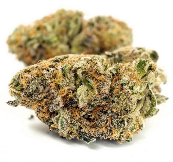 Sherbet Weed Strain Joburg