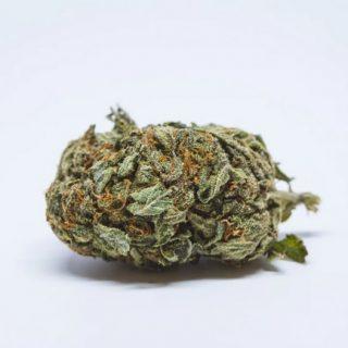 White Berry Weed SA