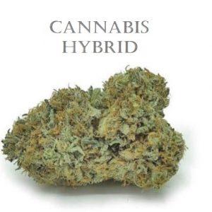 Hybrid Weed Strains SA