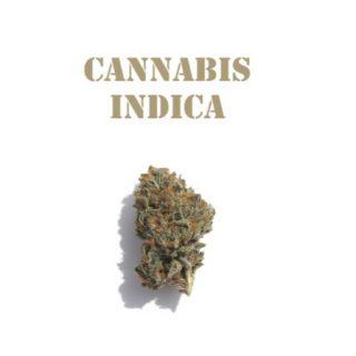 Indica Weed Strains SA