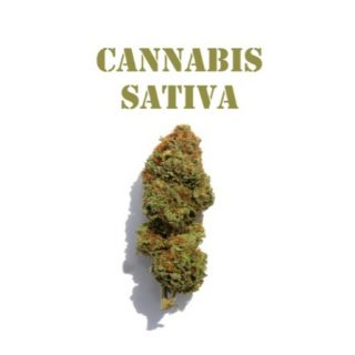 Sativa Weed Strains SA